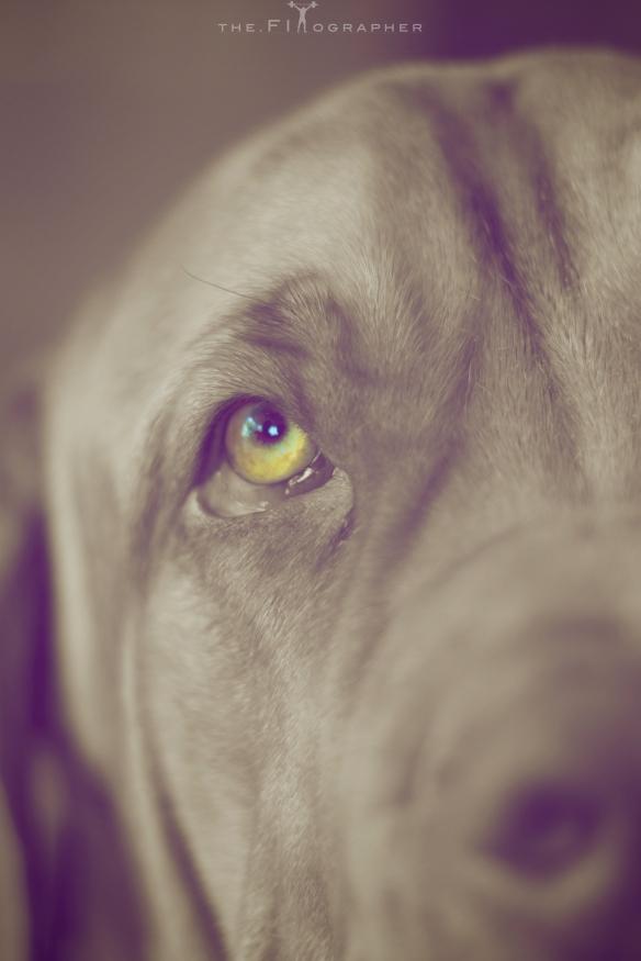 Maxxy Eye 1