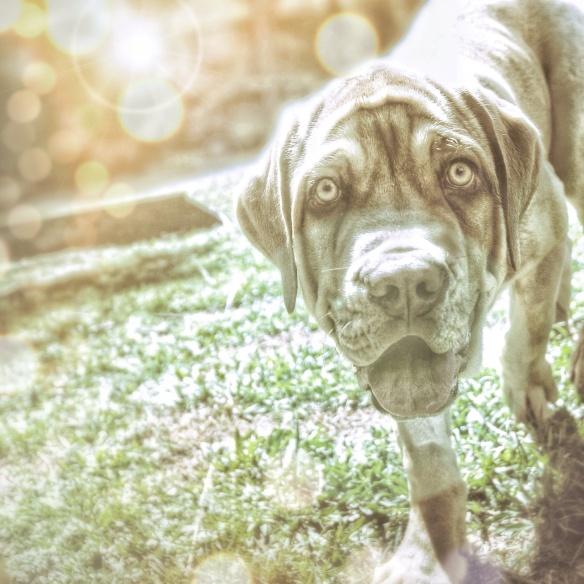 Maxxy as a Pup (1)